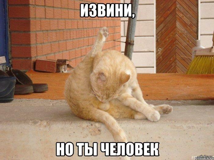 Кот песня яички