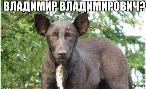 Похож ведь)