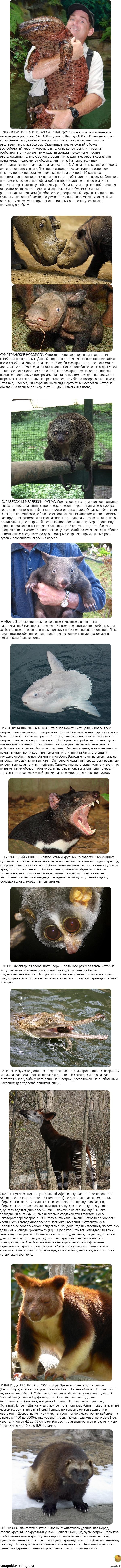 Животные редкие животные научные