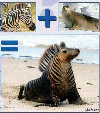 смешанные животные в картинках