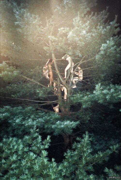 Чокнутые нудисты природа, нудисты, чокнутые, елка.