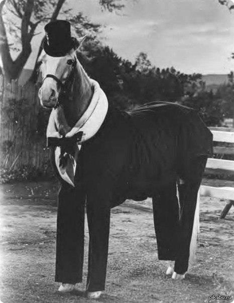Конь в пальто конь пальто