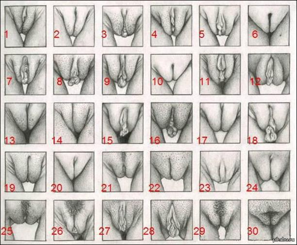 Фото форм женских влогалищ 28 фотография