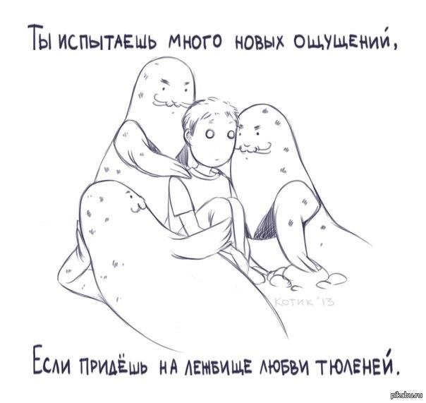 Продолжая тему о тюленях