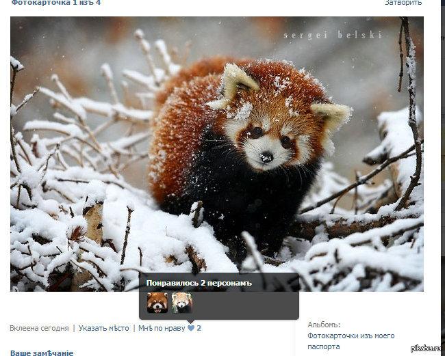 Панды заценили аватарка красная