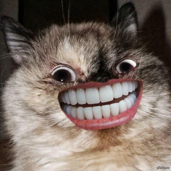 кот веселый картинки