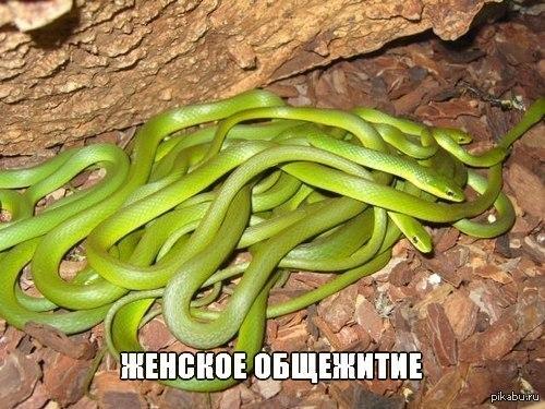 фото змей женский коллектив
