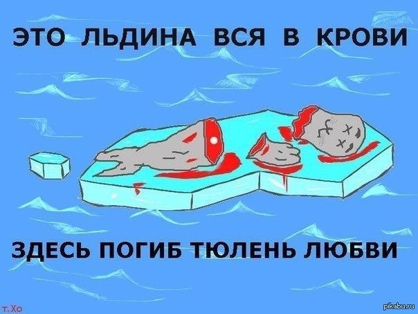 Вот как то так Закончились приключения тюленя