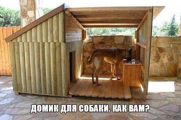 фото собак для дома и для семьи
