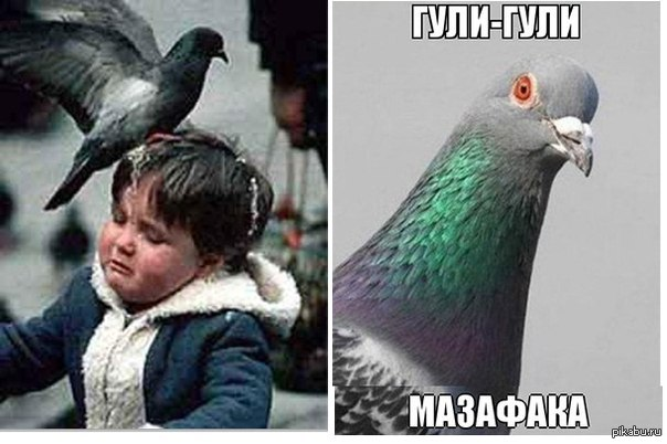 http://s.pikabu.ru/post_img/2013/11/05/11/1383674061_1921348403.jpg