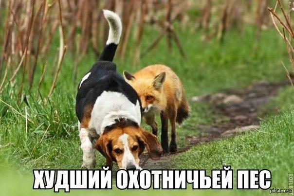 картинки собака на охоте для детей