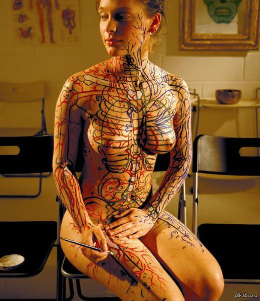 Анатомия.