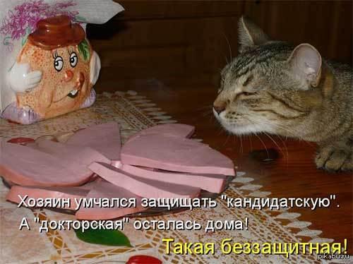 смешные картинки котов с едой