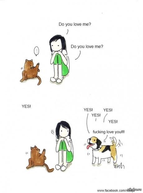 собаки видео приколы: