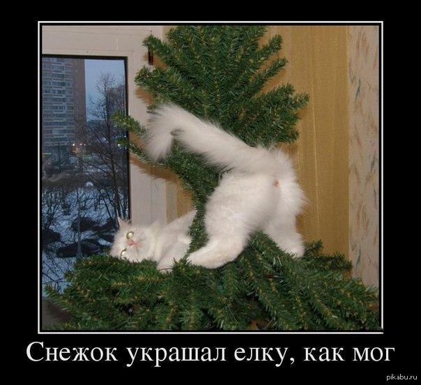 http://s.pikabu.ru/post_img/2013/12/05/5/1386220075_2017486908.jpg