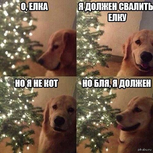 что есть собака: