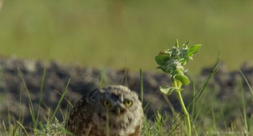 фото птицы сыча