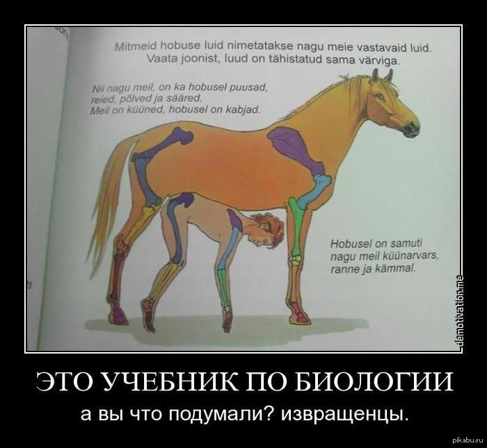 конь трахает: