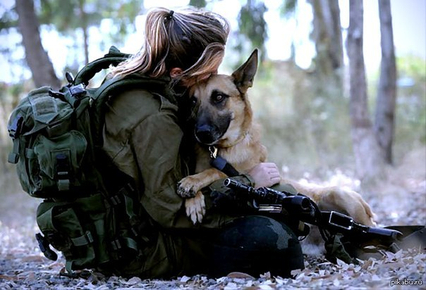 собаки в военной форме картинки
