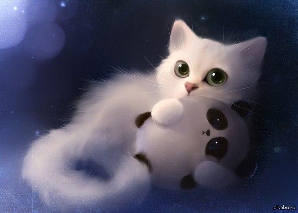 картинки с котами красивыми