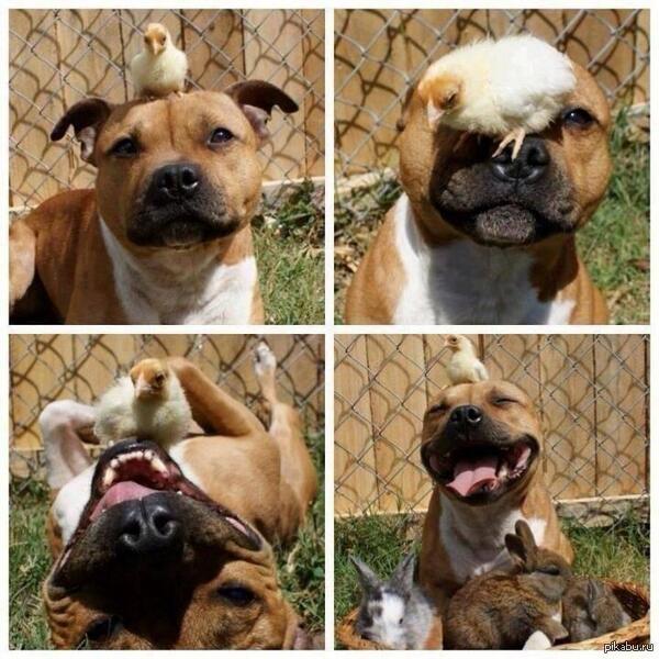 самые дружелюбные собаки с фото