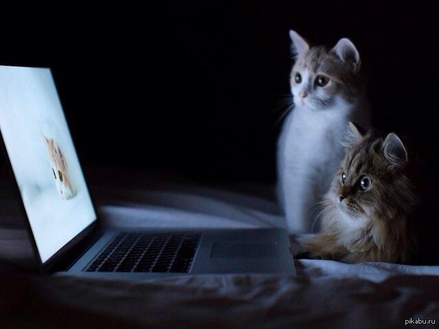 chatik tv kitty