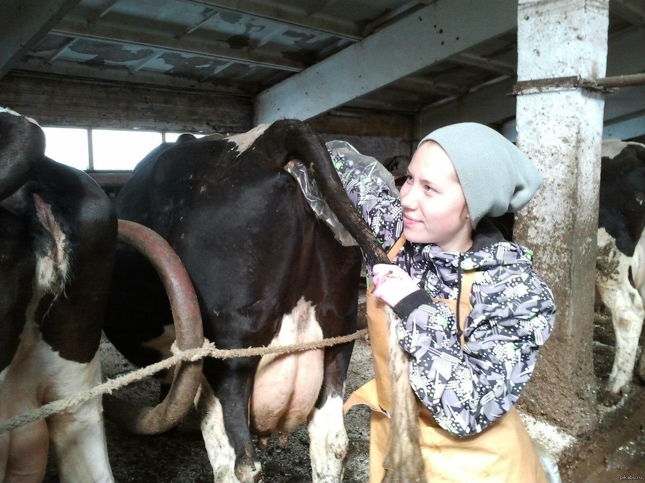 Фото жопы коровы 22 фотография