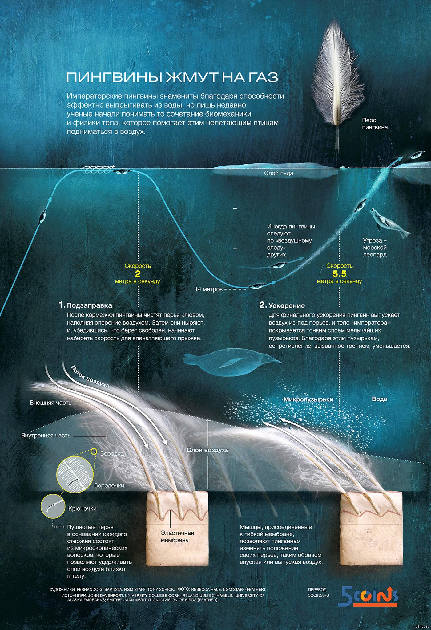 Интересные факты про пингвинов