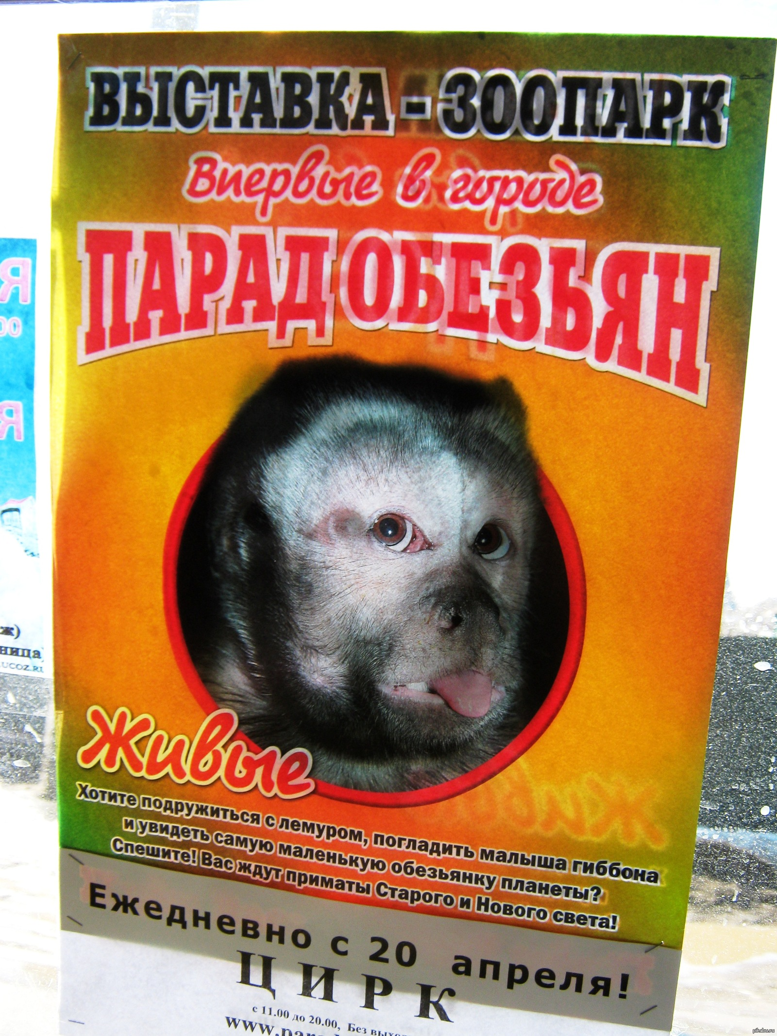 Смотреть фотографии обезьян любительское 4 фотография