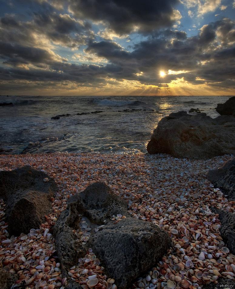 Тёлок раздевают на пляже 23 фотография