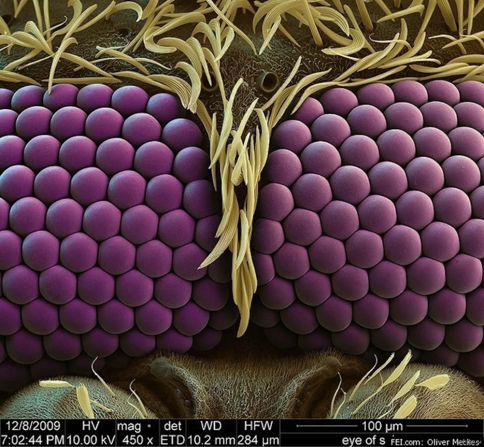 Фото сиськи под микроскопом 1 фотография