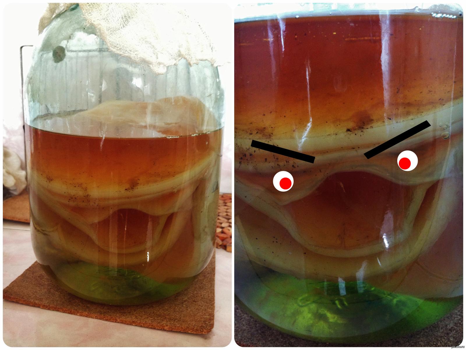 Как сделать напиток чайный гриб