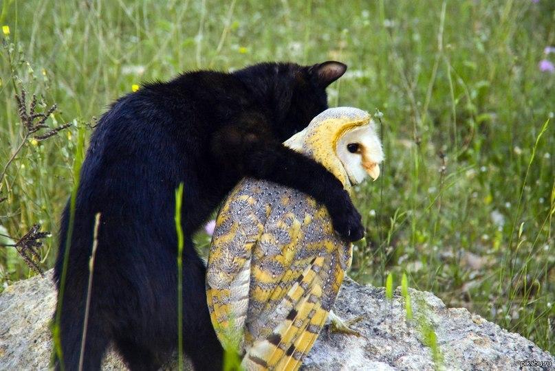 сова и кот картинки