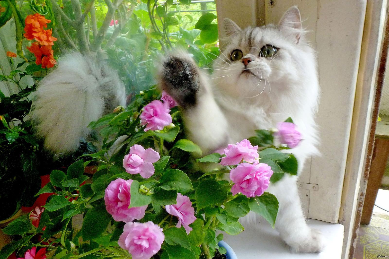 Котята и цветы фото