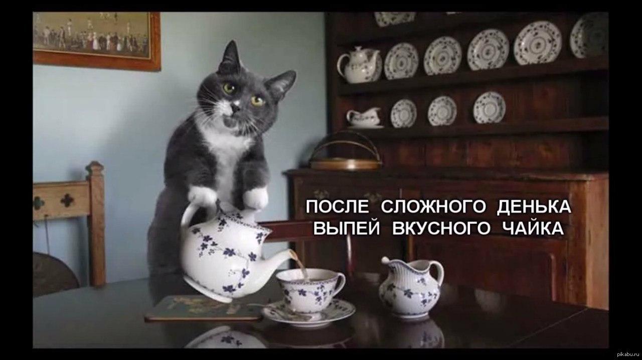 Хочу такого кота фото
