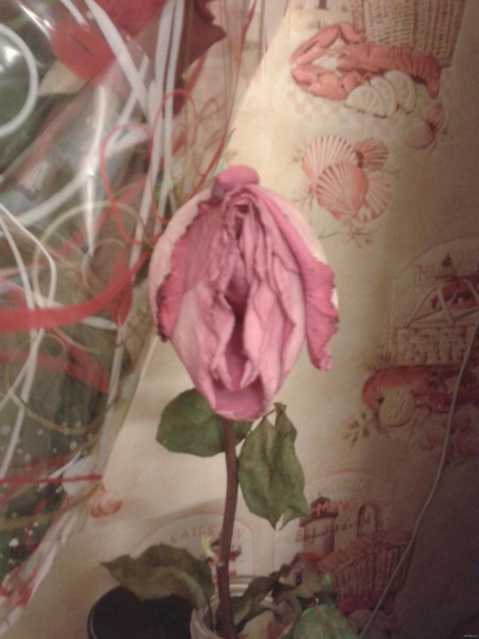 Фото пизда как роза фото 134-71
