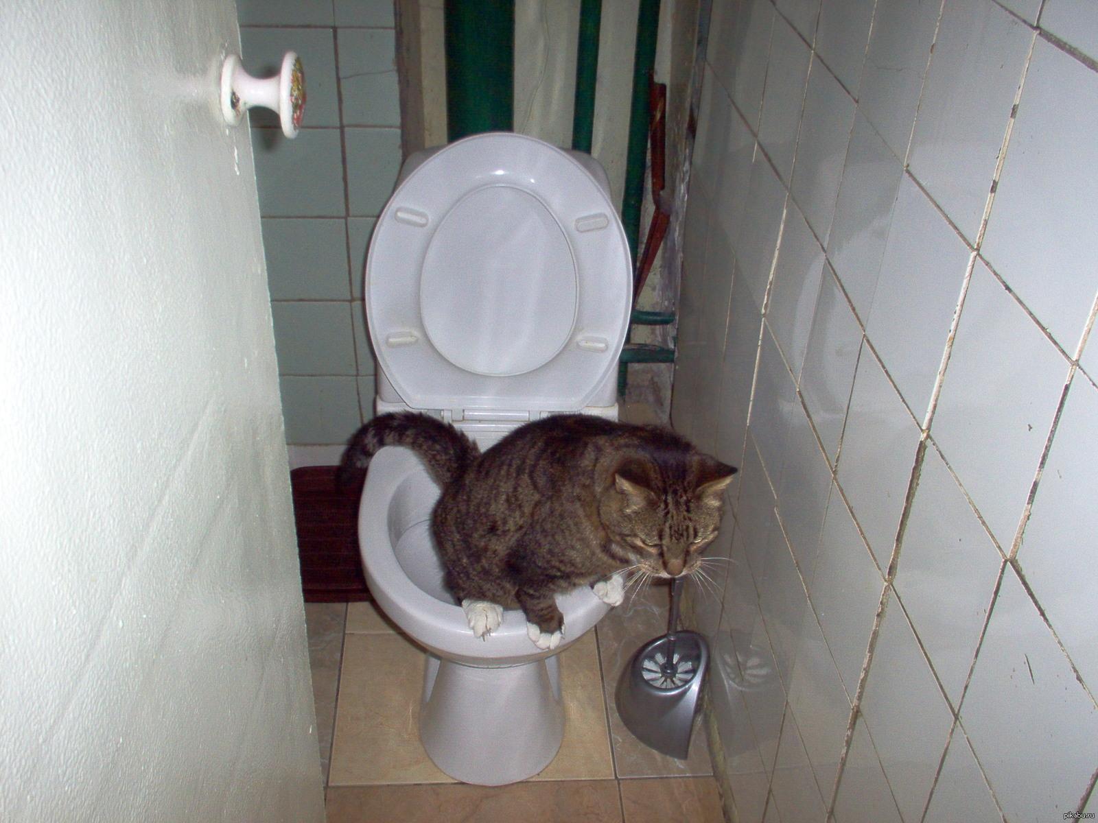 Шпионим в туалете 5 фотография