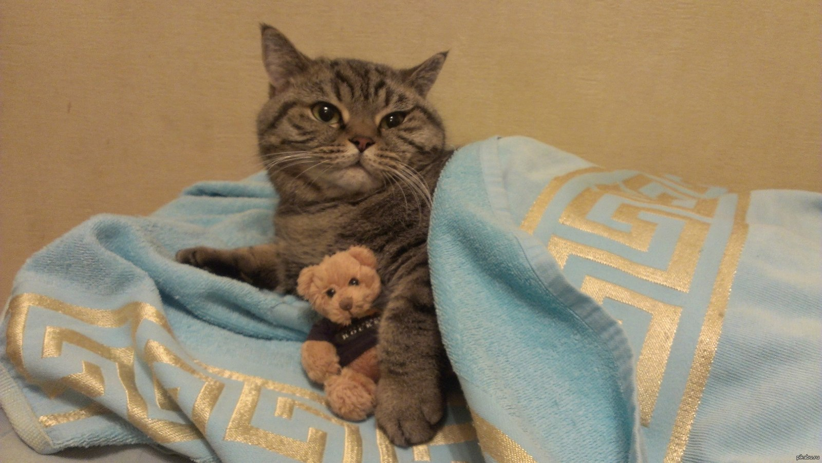 Сношение с котом 7 фотография