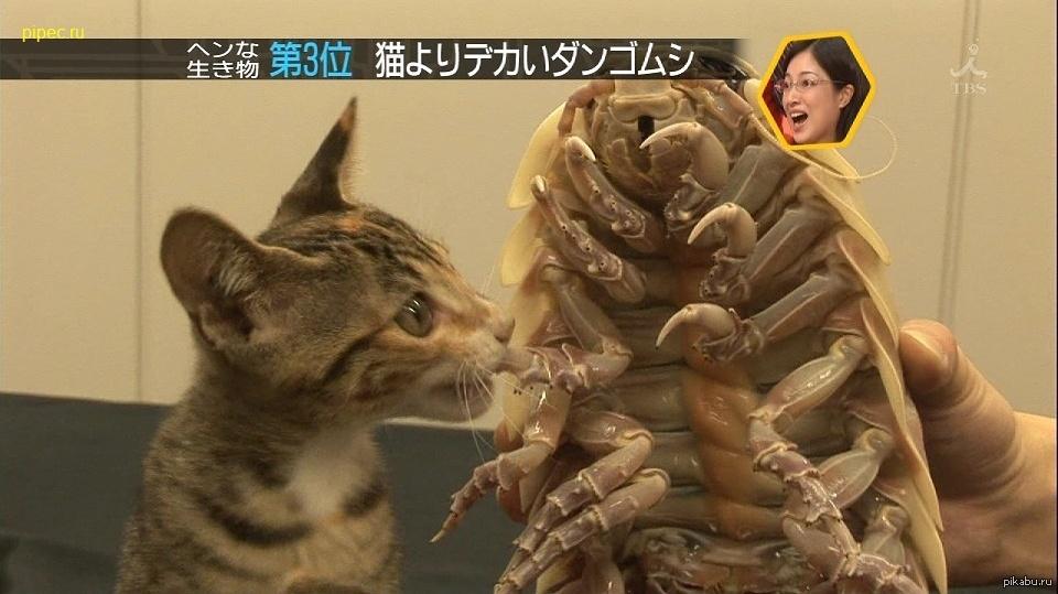 Японское шоу с вибраторами 24 фотография