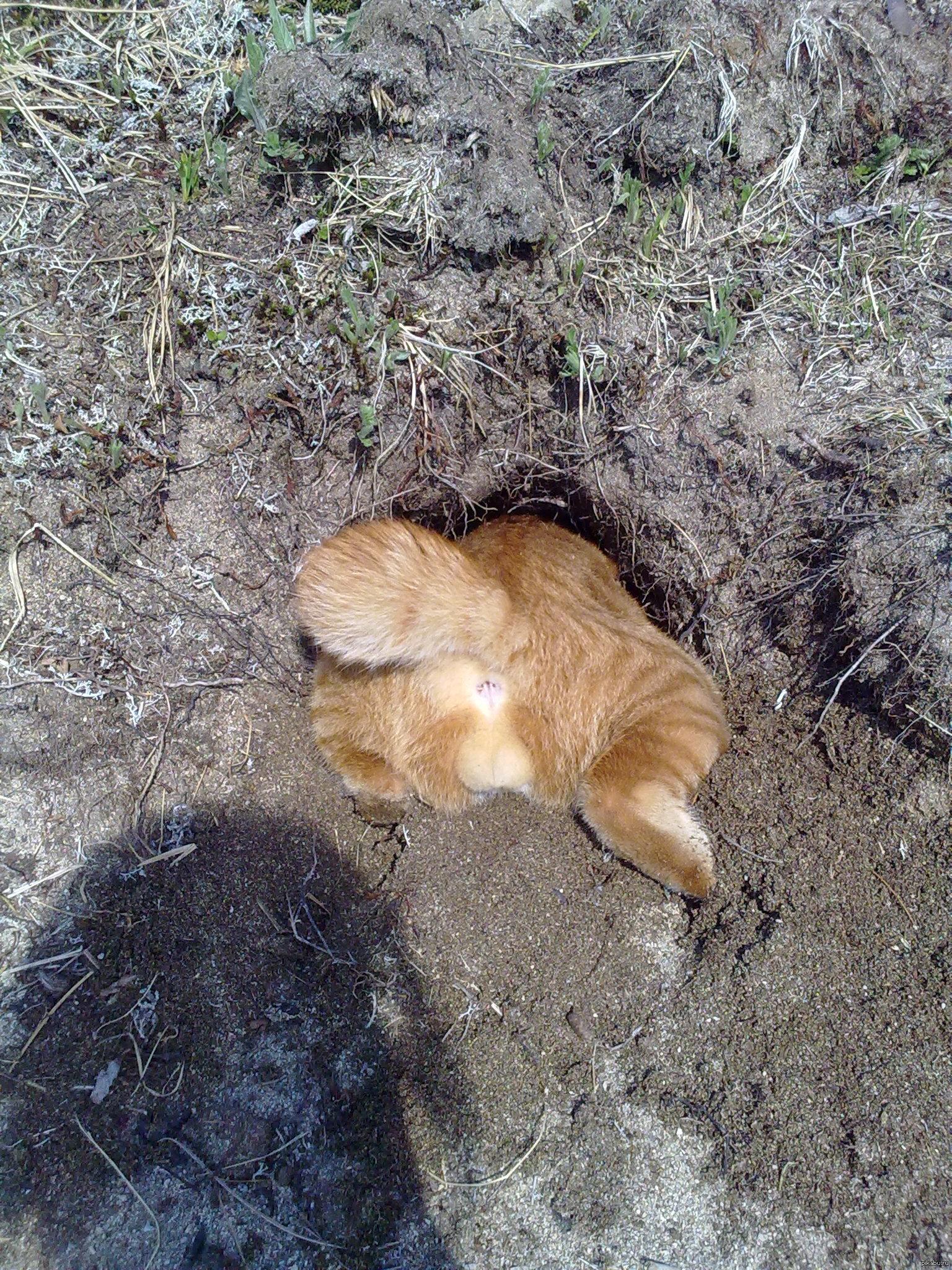 Фото попы с котом 8 фотография