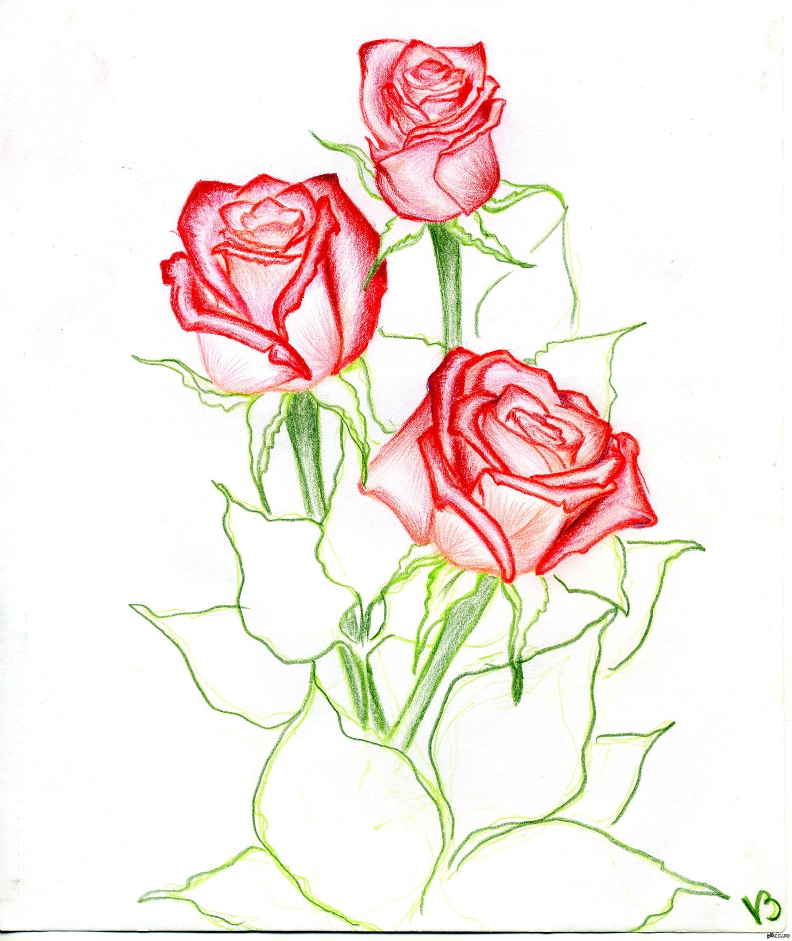 Нарисовать орхидею для начинающих