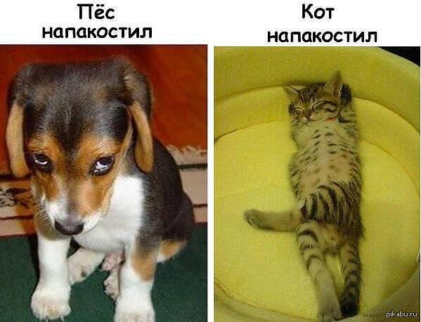 http://s.pikabu.ru/post_img/2013/09/29/0/1380399778_1149931853.jpg