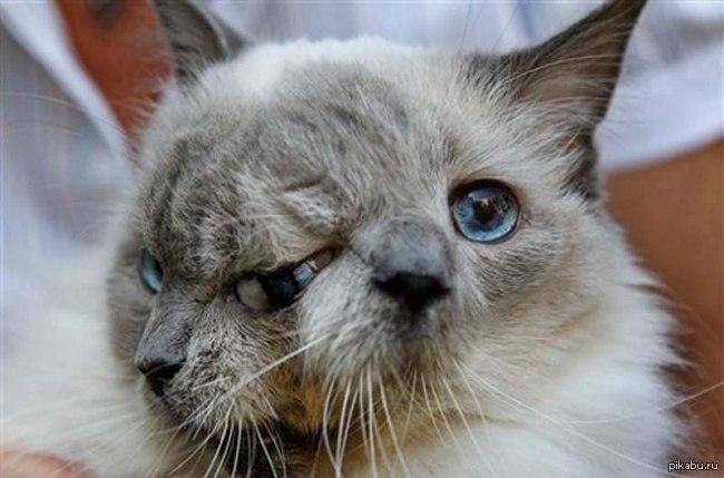 Картинки по запросу Двуликий кот по имени Фрэнк и Луи